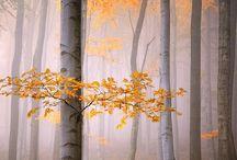 Seasons | autumn