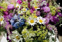divoke kvety