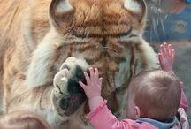 Veslá zvířata