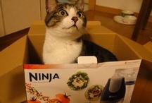 Luna -- my adorable cat