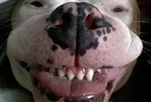 Smily dogs