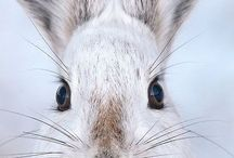 Rabbits, Bunnies and Hares