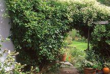 Garden & Lawn Ideas / by Margie Ryan