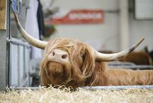 Royal Highland Show: Past & Present / The Royal Highland Show takes place just outside Edinburgh every June. Each year, thousands learn about food, farming and the countryside.