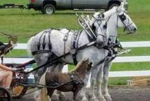 Horses - Cavallos - Chevals - Pferde