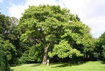 Arbori/ plante frumoare