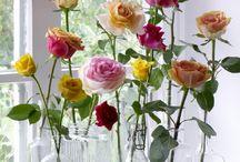 Vases-glass