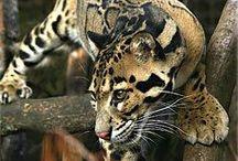 Wildlife / Everything wild