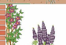 ЛД растения