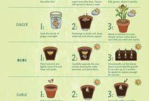 Grønnsaker og hage