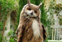 nitay kamuy / 森の神様みたいな鳥。