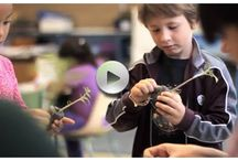 Little Green Thumbs Videos / Our vision: a garden in every school, a school in every garden.