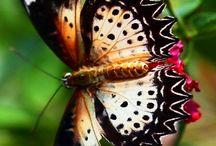 Butterfly :-*