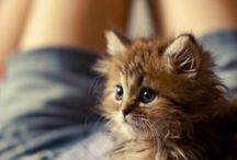 cats ♡♡♡ / by Catalina Chunza Zamora