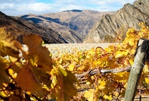 Views of Our Vineyards  / It's beautiful scenery in every direction at our winery located in the heart of Central Otago, New Zealand.