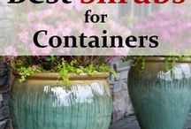 plantes en contenants