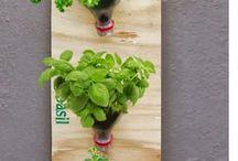 plantas e hortas