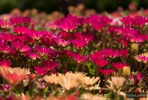 Flower photography / This board is all about flowers. All photographs clicked by Swapnil Nevgi