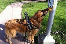 Service Dog Dex / by Elysse Fleece
