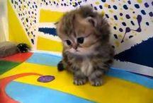 mini hayvanlar