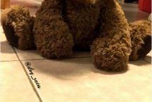 dog or bear???
