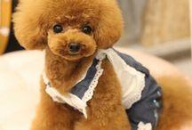 Cachorro de caniche
