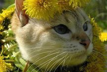 CAT PRINCESSES / Cats with flower crowns and floral headpieces