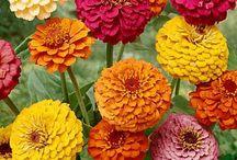 Cut Flowers Availability