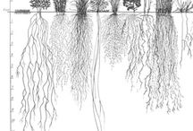 Plants root system