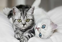 Soft Kitty, Warm Kitty, Litte Ball of Fur / by Nikki Basil