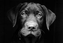 Pet Photography / Beautiful, Inspiring and Cute Pet Photography