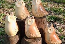 Owls / Pictures of owls