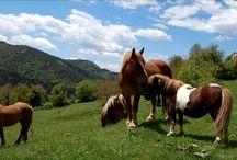 Nuestros paisajes / Exterior de la casa, donde pasear y dar de comer a los caballos.