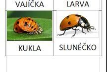 hmyz belasok ms