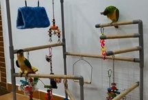 bird aviary ideas