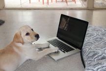 Pet Blogging