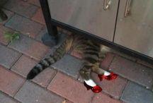 funny cats / by Emma Huntington