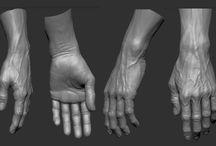 Anatomy Class - Hand