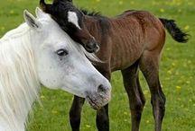 mama's paarden mapje
