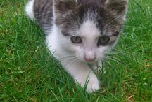 Sally the cat :3