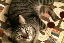Williams Laura cats cats cats