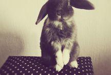 bunnies 》