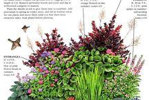 Zahradka