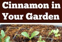 Garden Tricks and Tips