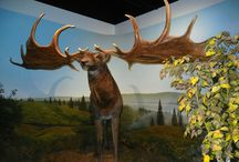 IWM Exhibits / Here are a few of our dioramas and exhibits at IWM
