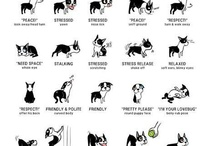 Koira-asiaa