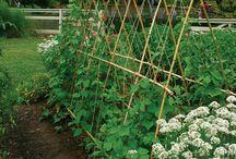 Kebun sayuran