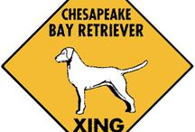 Chesapeake Bay Retriever Signs and Pictures / Warning and Caution Chesapeake Bay Retreiver Dog Signs. https://www.signswithanattitude.com/chesapeake-bay-retriever-signs.html