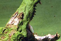 Ref: Reptiles