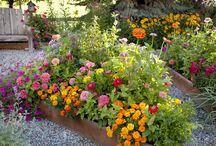 Hage/Garden